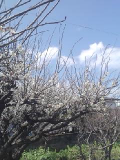そこにも春が!